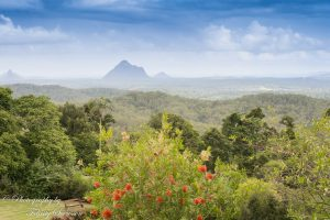 ClientWebCopy-2-of-15-1-300x200 Maleny Botanic Gardens and Bird World, Australia