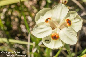 ClientFBCopy-1-of-4-2-300x200 Australian flora